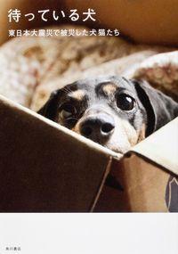 待っている犬 / 東日本大震災で被災した犬猫たち
