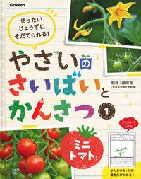 1 ミニトマト
