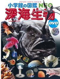 深海生物 DVDつき