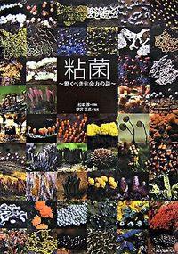 粘菌 驚くべき生命力の謎