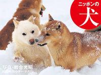 2020年カレンダー ニッポンの犬の表紙画像