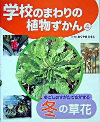 学校のまわりの植物ずかん 4