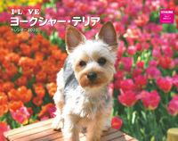 I LOVE ヨークシャー・テリア カレンダー2020の表紙画像