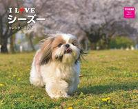 I LOVE シーズー カレンダー2020の表紙画像
