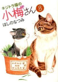 キジトラ猫の小梅さん 8
