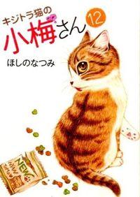 キジトラ猫の小梅さん 12