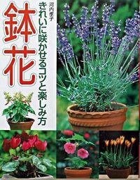 鉢花 : きれいに咲かせるコツと楽しみ方