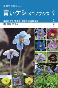 青いケシ メコノプシス